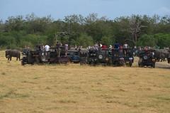 Jeeps gathering