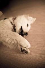 DSC_0963 (Manuel D Snchez) Tags: dogs perros dogos seleccionar