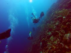 1000 Steps Reef Wall - Bonaire (mitch_gaines) Tags: netherlands dutch underwater scuba caribbean reef bonaire antilles 1000steps