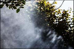 20140729-71 (sulamith.sallmann) Tags: light plants plant france licht leaf frankreich europa pflanze pflanzen normandie blatt bltter sonnenstrahlen manche fra rauch sonnenlicht lahague bassenormandie siouville