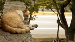 Current mood (Haydelis) Tags: cat canon 50mm mood loneliness gato lonely feeling canont3