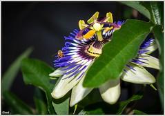 Faszinierende Blume - fascinating flower (*smi*) Tags: flower color blume insekt