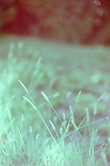 (Terrini) Tags: film nature grass backlight analog weeds suburban kodak bokeh lawn naturallight 35mmfilm overexposed backlit analogue overexposure minoltaxd11 digitalscan walgreensprocessing ultramax400 rokkormd50mmf14 consumerfilm