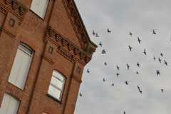 Early Morning Derby CIty Center at the Mill (Matt Burke) Tags: morning birds early rooftops derbyshire pigeons stokeontrent derby stokeontrentstaffordshirestaffsmidlandswestmidlandsnorthenglandukunitedkingdomgbgreatbritainpotteriesbritish