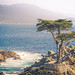 "Lone Cypress • <a style=""font-size:0.8em;"" href=""https://www.flickr.com/photos/41711332@N00/14985428229/"" target=""_blank"">View on Flickr</a>"