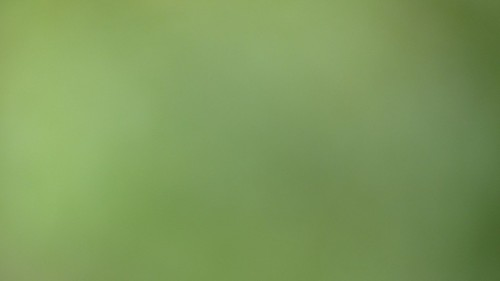 Background_Green_01