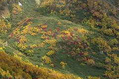Tsugaike Nature Park (tak iwayoshi) Tags: autumn fall colors japan asia autumnleaves nagano japanesealps tsugaike tsugaikenaturepark