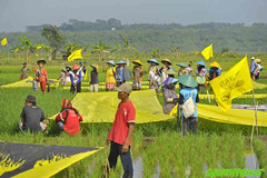 GP0STOLYH (Greenpeace International) Tags: people yellow children rice farmers fields banners props fishers