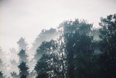 Beach Sleep (Laura-Lynn Petrick) Tags: trees sleeping summer toronto love beach forest swimming couple secretbeach july kai bums series summertime leafs torontobeach summerday torontosummer lauralynnpetrick
