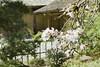 Zen (cheezepleaze) Tags: texture nature japanesegarden spring painted bamboo carmelia drygarden