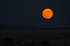 IMG_0967a (berserker170) Tags: luna moon 7d eos sigma 150500 noche night flickrexploreme