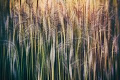 Motion (Photography Revamp) Tags: motion nature wheat poland vignette wheatfield nikond3200 nikond7100 nikond5200 nikcollection podkarpackievoivodeship glinikzaborowski