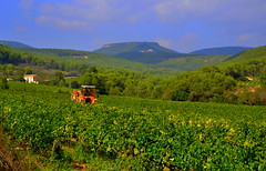 Verema, Santa Maria de Foix, Alt Penedès. (Angela Llop) Tags: spain day eu catalonia vineyards viñedos vinyes verema torrellesdefoix pwpartlycloudy