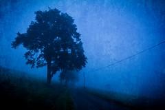 Misty Morning (Markus Finke Blickfelder.com) Tags: mist nature fog landscape nikon nebel natur blau landschaft markus nachtaufnahme finke abendstimmung nachtstimmung d7100 blickfeldercom