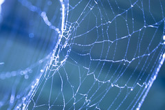 Web by SashaTikhonov, on Flickr