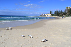 Rainbow Bay 1 (thestreetcat) Tags: coolangatta coolangattabeach goldcoast australia sunset beach seasandsky thestreetcatgoestoau holiday thelanddownunder ozandbeyond snappersrock kirrabeach kirrahilllookout duranbahbeach rainbowbay pointdanger tweedheads travel2017 whenincoolangatta wheningoldcoast
