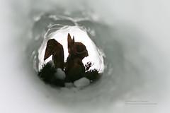 雪洞裡 ~ (湯小米) Tags: canon 1dx ef2470mmf28l japan 犬山城 白帝城 國寶 名古屋 中部地區 昇龍道 高山 高山陣屋 新穗高 穗高連峰 北阿爾卑斯山脈 白川鄉 世界文化遺產 北陸 金沢 輪島梯田 世界農業遺產 白米千枚田 合掌村 三大茅草屋 纜車 雪 snow 雪景 雪地 夜景 長時間曝光 ef1635mmf28l fisheye 魚眼鏡 微距攝影 tokina1017mm 花 plumblossom 神社 和服 傳統服飾 北アルピス 旅行 雪見に 下呂温泉 firework 花火 煙火 古街 古い町 高山纜車 奧飛驒 奧飛驒溫泉鄉 星空 star 星軌 startail 飛駝古川 你的名字 聖地巡禮 君の名は 金箔 金箔之都 兼六園 三大名園 金沢城公園 金沢城 ひがし茶街 21世紀美術館 綠洲21 skypromenade