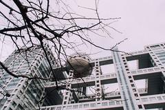 _DSC8939-2 (kailothemadness) Tags: 東京 tokyo nikon d7200 日本 japan 台場 御台場 odaiba お台場 おだいば 富士電視台 fuji television network 株式會社富士電視