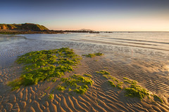 Wondering moss. (sion_rhys) Tags: sunset sea sky sun wales moss sand sigma beaches 1020mm anglesey