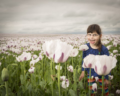 edit-field-3495 (steptoe1972) Tags: flowers summer nature girl field june laughing canon outdoors happy cloudy ambientlight daughter sigma poppy poppies speedlight smilling flashes cerebralpalsy 2470mm beautydish amibient canon6d yn622c