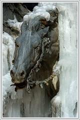 Cheval de glace (Herve DURAND) Tags: plaza winter sculpture horse france ice caballo cheval place lyon hiver invierno francia hielo glace terreaux esculultura