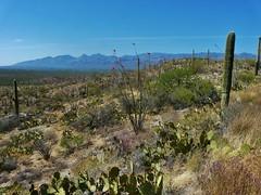 Saguaro NP - east district #3 (jb10okie) Tags: park travel vacation arizona usa mountains america spring nps trails saguaro nationalparks saguaronationalpark 2013 eastdistrict