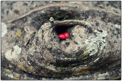 baobá (zenog) Tags: jardimbotanico