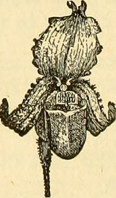 "Image from page 553 of ""The American florist : a weekly journal for the trade"" (1885)"