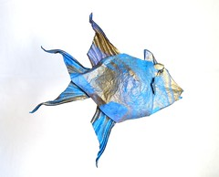 Queen Triggerfish (folding~well) Tags: ocean sea fish water paper origami folding triggerfish