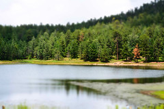 Riggs Lake NE Side (TW Shoots) Tags: arizona lake mountains mt az graham riggs pinaleno