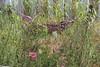 RHS Tatton Flower Show 2014 (Carolyn Willitts) Tags: garden flowershow rhs tatton 2014 showgarden