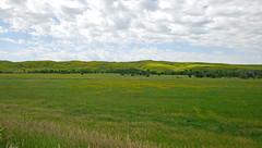 golden hills (foxtail_1) Tags: southdakota yellowsweetclover melilotusofficinalis