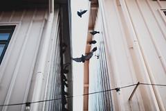 BÖÖÖÖRDS (maja björsne) Tags: birds canoneos5dmkii swedishphotographers