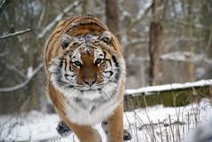 2014-01-29 Snow Aria (147)