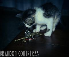 memories (BrandonContreras) Tags: happy memories like