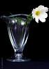 (koliru) Tags: flower color macro nature glass closeup canon garden studio ilovenature bravo quality tamron 90mm iloveit flickrpix abigfave
