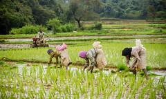 If you ATE today .... THANK A FARMER .... (PRABHU SHANKAR C) Tags: farming eshan agriculture karnataka prabhu prabhushankar prabhueshan
