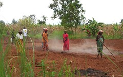 "burundi women digging • <a style=""font-size:0.8em;"" href=""http://www.flickr.com/photos/62781643@N08/14973727856/"" target=""_blank"">View on Flickr</a>"