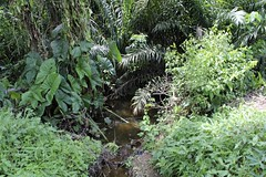 Pond (Jujufilms) Tags: africa travel nature photography pond culture photojournalism nigeria socialmedia naturalpond ayotunde osunstate jujufilms jujufilmstv erinoke nigerianstreetauthor ogbeniayotunde
