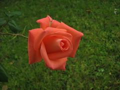 Un debole arancio autunnale (spartano2010 (Thanks to everyone for 500,000 views) Tags:
