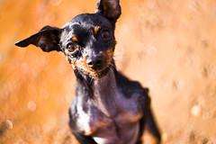 En dos patas (Fabricio Erramuspe) Tags: dog perro animales mascotas helios