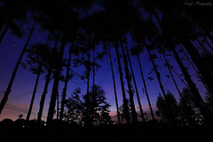 Through the Woods (ojang jerry) Tags: longexposure light sunset sky night stars landscape eos amazing woods glow tall ef1740mm 5d2