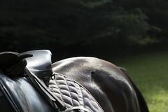 Pied  l'trier (Islxndis) Tags: horse animals shiny horseback saddle horseriding loh croup stirrup lightrelection