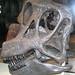 Brachiosaurus sp. sauropod dinosaur (Morrison Formation, Upper Jurassic; Felch Quarry 1, near Garden Park, central Colorado, USA)