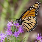 Lady Bird Johnson Wildflower Center-18.jpg thumbnail