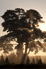 Silhouetted tree with sun rays (Jim Corwin's PhotoStream) Tags: morning travel trees inspiration nature beautiful beauty vertical misty fog mystery sunrise wonder landscape outdoors photography countryside morninglight quiet natural glory sightseeing foggy earlymorning scenic meadow silhouettes dramatic peaceful nobody icon glorious serenity ethereal northamerica remote rays spirituality inspirational dreamlike sunrays inspire contemplative iconic sunbeam silhouetted tranquil naturalworld mothernature inspiring sunray crepuscularrays contemplation newday tranquilscene crepuscularray uplifting traveldestinations beautyinnature smalltrees