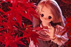 Love cheeks with autumn leaves:紅く染まってそんなことを言うから_02 (sora-to-hari) Tags: autumn girl toy doll autumnleaves ennui lightup 人形 ドール 紅葉 秋 volks 玩具 longskirt kneehighsocks 少女 nagatoro purpleeyes earlyautumn 初秋 ライトアップ toheart2 dollfiedream 長瀞 ロングスカート onelength アンニュイ 小牧愛佳 ドルフィードリーム manakakomaki autumnclothes バニララテ ニーハイ ボークス いいんちょ iinchou 月の石もみじ公園 ワンレン パープルアイズ トゥハートツー 秋服 tweedbest ツイードベスト banirarate rockmapleparkofthemonth nuanceonelength ニュアンスワンレン