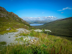 Scottish Highlands (Scotland. Gustavo Thomas  2014) (Gustavo Thomas) Tags: voyage uk travel viaje summer lake flower green landscape lago scotland highlands europe scottish lac paisaje escocia verano loch t paysage paesaggio cosse travelog