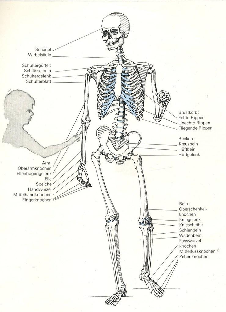 Ungewöhnlich Anatomie Der Brust Knochen Zeitgenössisch - Anatomie ...