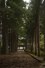 Minobu-san Kuonji Temple (HelenaTaylor) Tags: trees japan forest temple path mysterious yamanashi kuonji minobusan minobusankuonjitemple